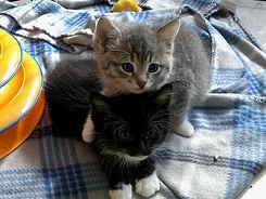 Kitten Friends.JPG