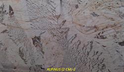 ALPINUS (2 CM)-#10307.jpg