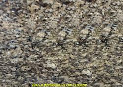 GIALLO IMPERIALE (2 CM)(CLOSE-=UP)-#11263