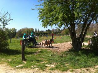 Un concours d'Attelage sous le soleil au Moulin de la Forge - Longvilliers