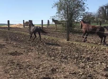 Sortie des poulains et jeunes au paddock - 27 Mars 2020