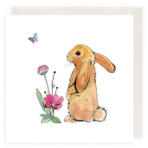 Curios Bunny