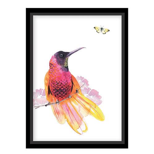 Stunning Hummingbird Wall Print