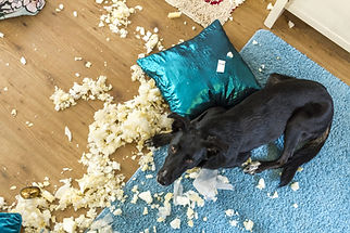 gryzienie poduszki.jpg