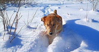 winter and dog.jpg