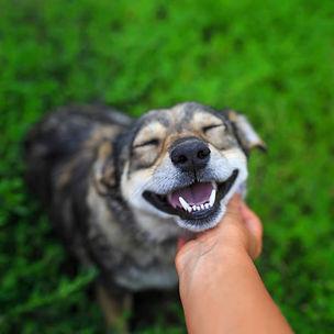 dog and love 2.jpg