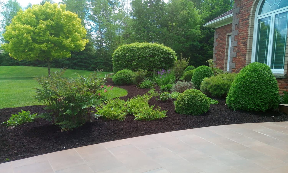Clean up and trim of hedges and shrubs