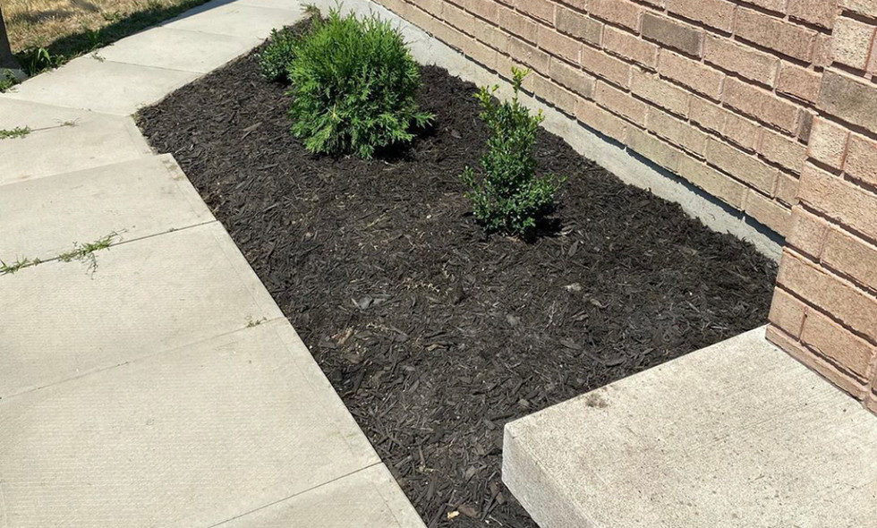 New Mulch and Plants
