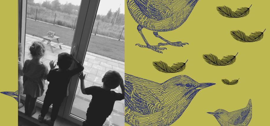 obserwujemy ptaszki w karmniku