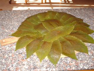 IL CASTAGNO Albero Sovrano 👑: non si butta via niente, tantomeno le foglie.