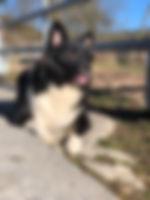Islandhund_Kjuka.jpg