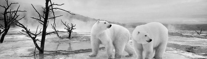polar-bear-3954474_1920_editedjpg