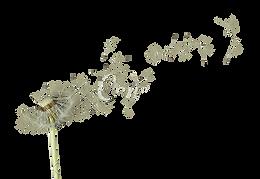 kisspng-the-dandelion-royalty-free-image