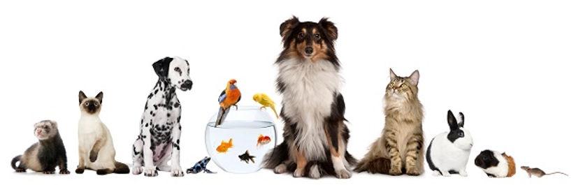 Animal Banner.jpg