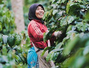 Sumatra5.jpg