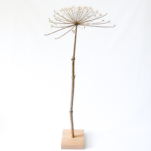 Dried hogweed flower with wooden block