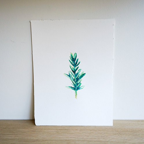 Water-colour drawing of rosemary