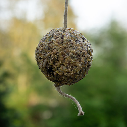 seedball for birds