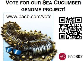 Help us to get the sea-cucumber genome sequenced!