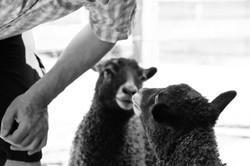 Shepherd with Pia & Fisk