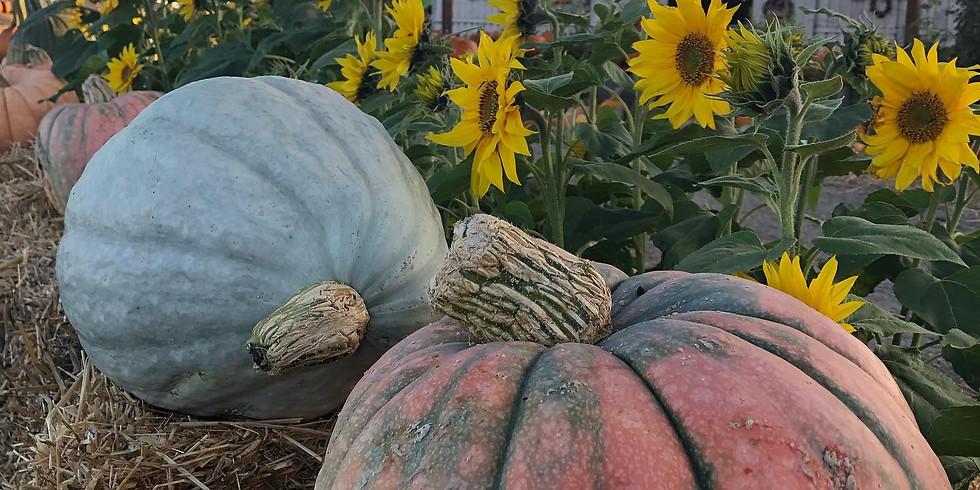 Daytime Pumpkin Patch & Corn Maze Reservation