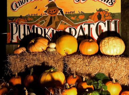 Pumpkins Galore, Haunted Corn Maze Nights, Carving Contest, & Halloween Corn Maze Trick or Treat!
