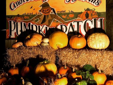 Pumpkins Galore, Haunted Corn Maze Nights, Carving Contest, & Halloween Corn Maze Trick or Treat!