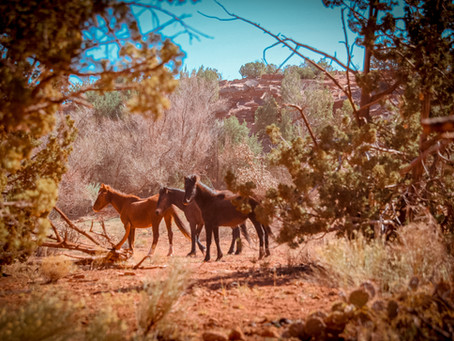Wild Horse Feeding Hubs Offer Financial and Management Solutions for the BLM Wild Horse
