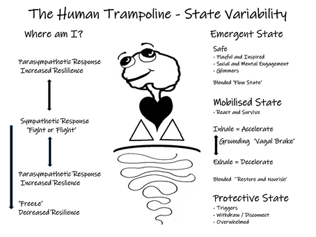 The Human Trampoline - State Variability