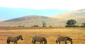 Afrika| Tansania|Safari im eingefallenen Vulkan-Krater| Der Ngorongoro Krater