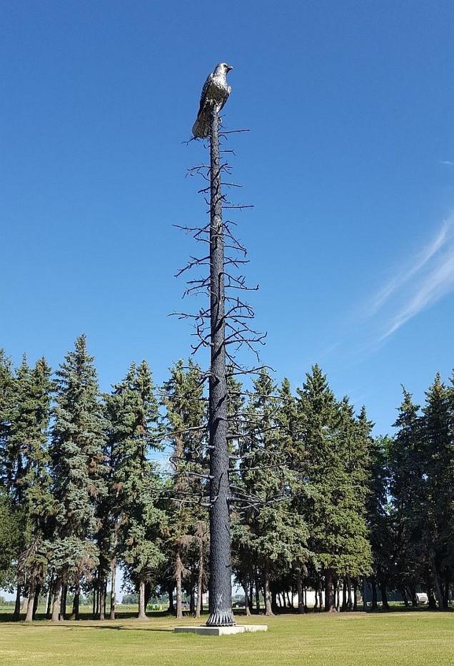 Eagle-on-Tree-wr.jpg