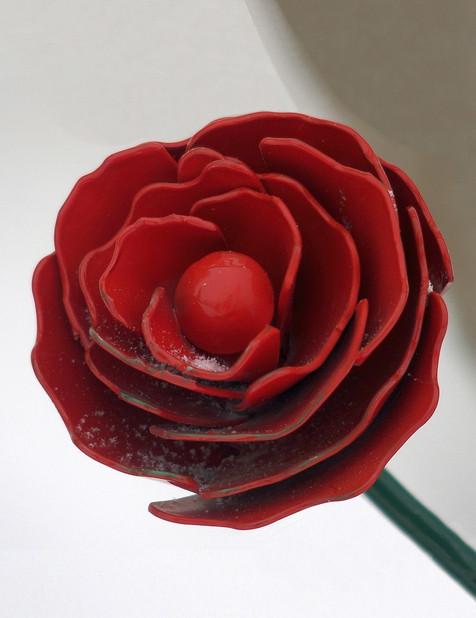 Rose 2 (closeup)
