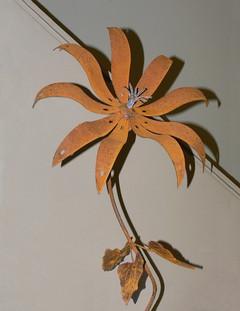 Large Flat-Petaled Flower with Mini Petal