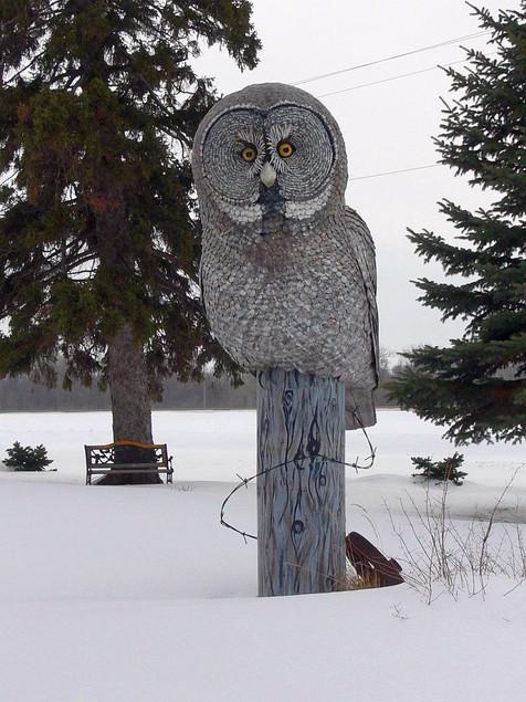 Great Grey Owl (overcast, winter)
