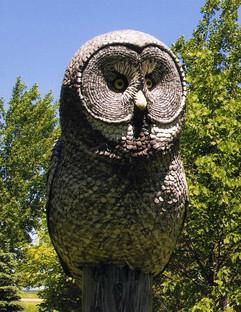 Great Grey Owl (summer)