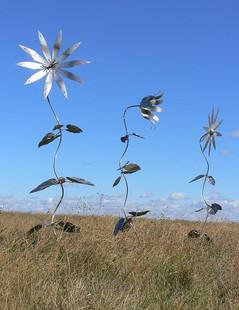 Triple Combo Flowers in Field
