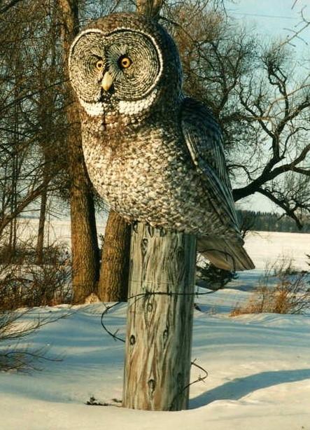 Great Grey Owl (sunny, winter)