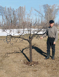 Jake's Metal Tree (with Jake)