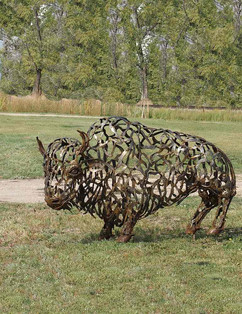 Bison (outdoors)