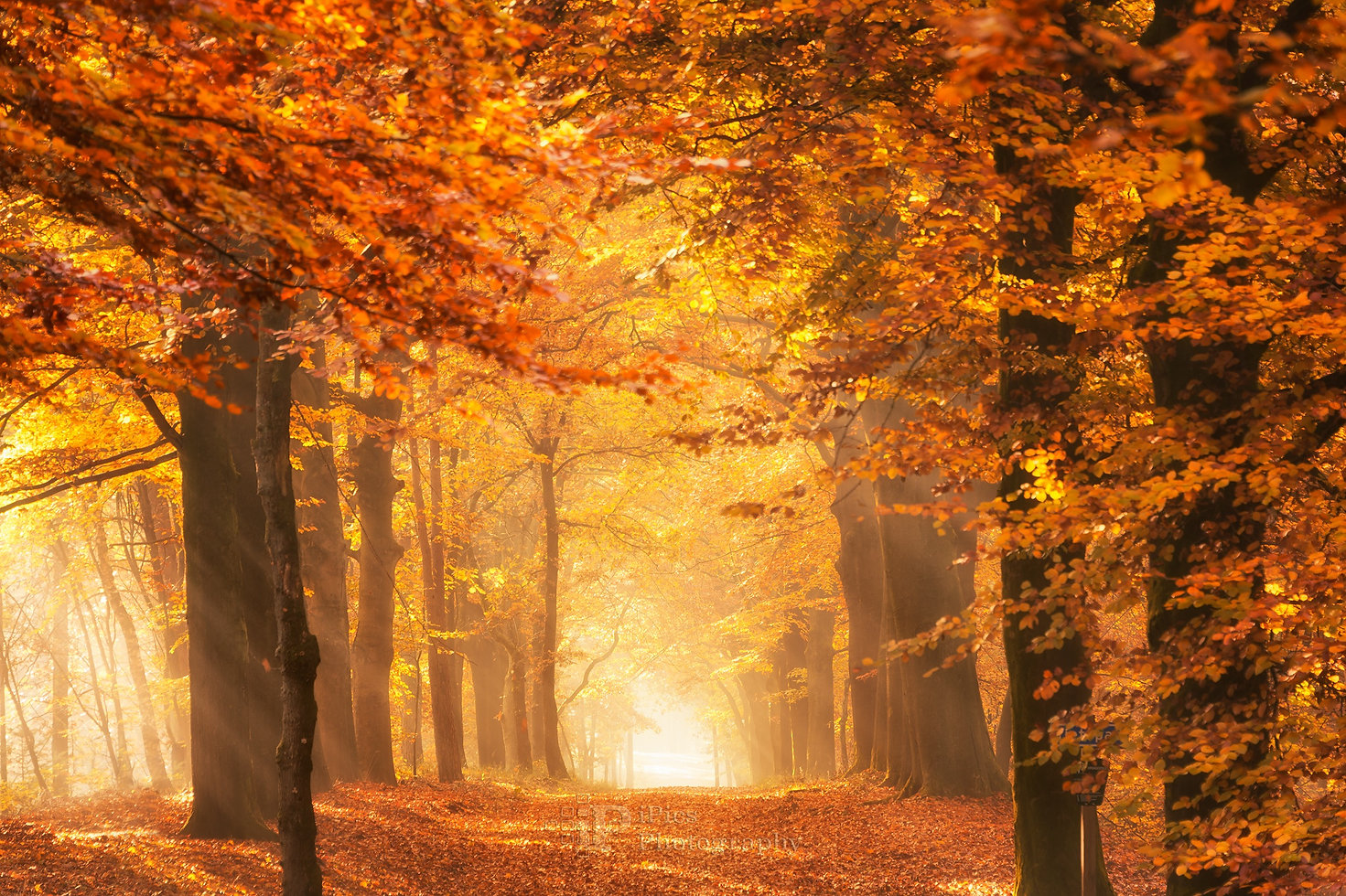 Forest path in the golden sunshine light at a sunrise in autumn in the Netherlands photo.
