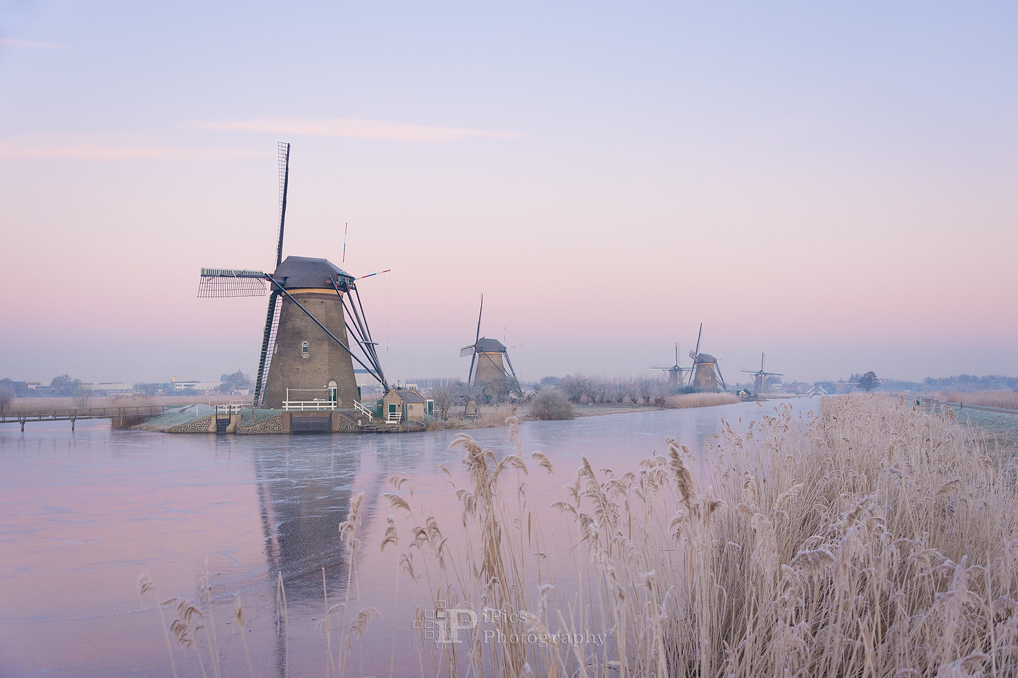 Windmills with reeds and ice in the soft morning light of a winter sunrise resulting in pastel hues and creating a frozen fairy tale landscape in Kinderdijk, the Netherlands.