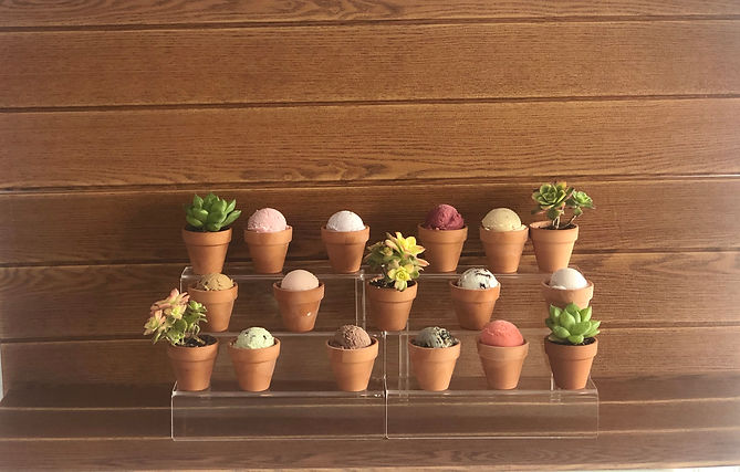 plants .jpg