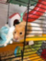 villa-felix-hamster.jpg