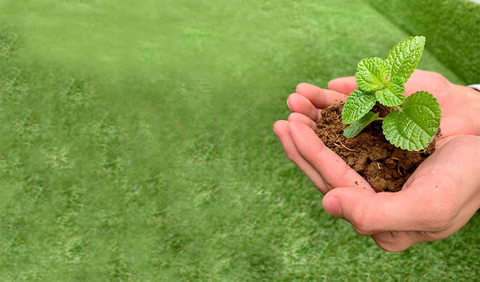 Website_CSR_Plant.png