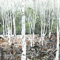 Himalyan Birches