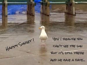 seagull raining.jpg