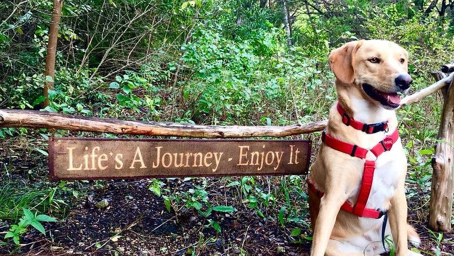 Life is a Journey Daisy_edited.jpg