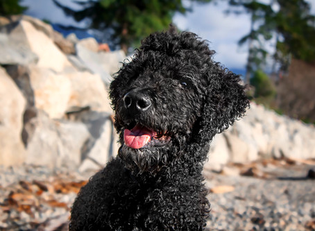 10 reasons why black dogs are amazing + a tribute to Fire Dogs