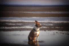 2019 April Gryffin Beach-21.jpg