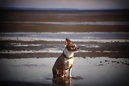2019 April Gryffin Beach-21.jpg